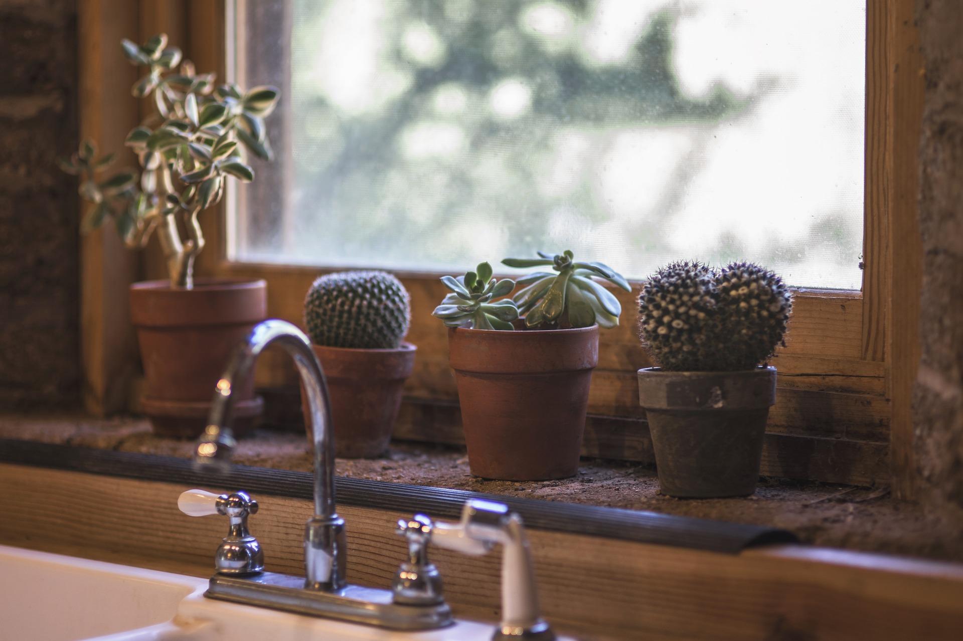 Kaktus sukulent kuchyně