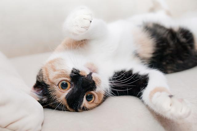 relaxace kočky