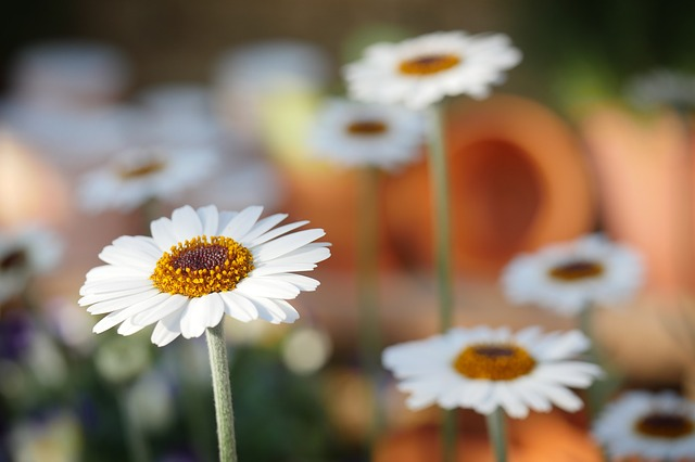 Květiny na zahrádce