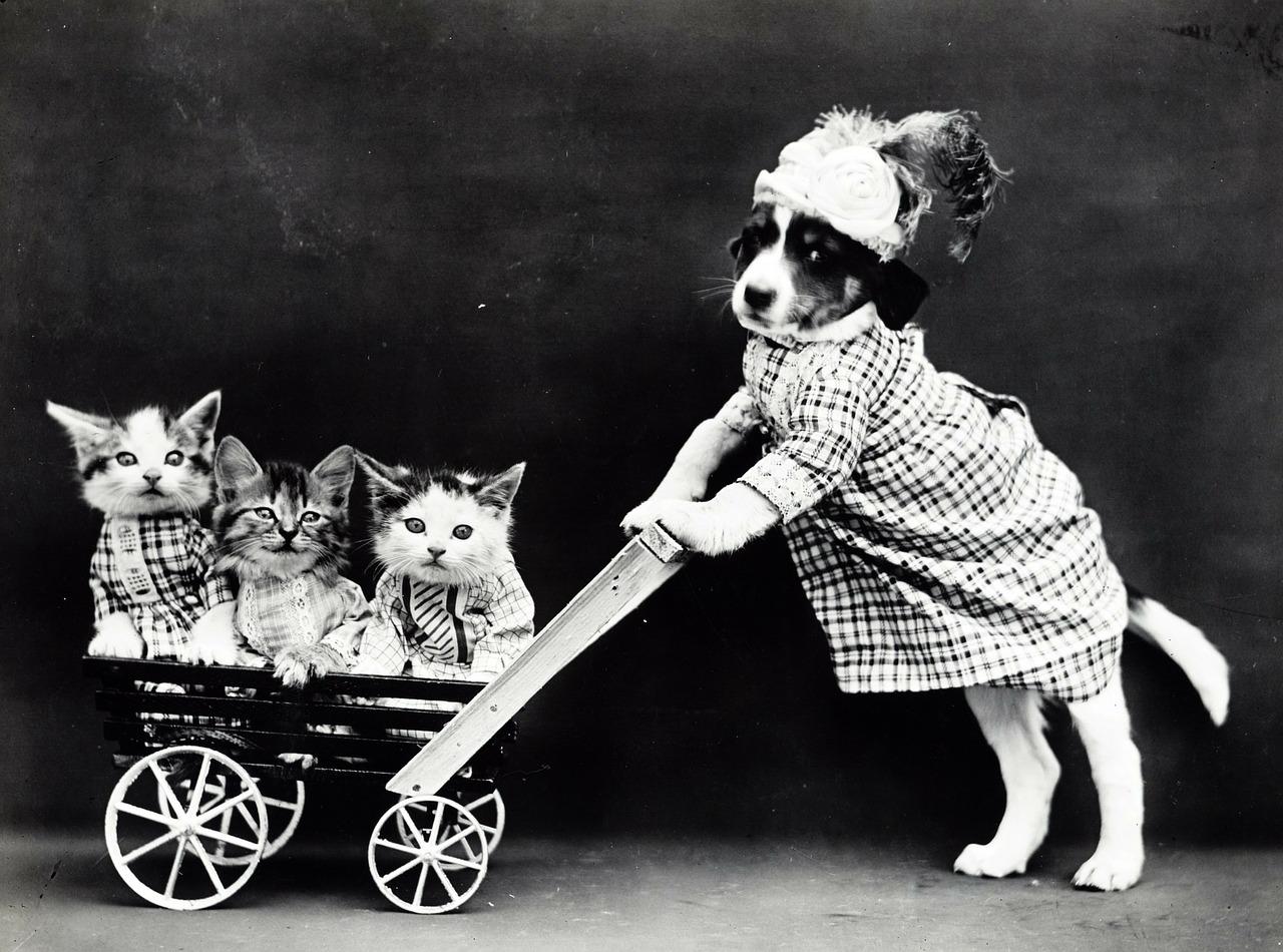 kočárek s koťaty